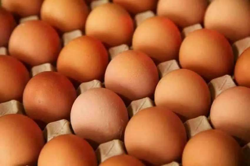 Eggs for sell 0
