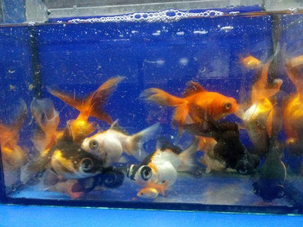 аквариумные рыбки, растения, оборудование,зоомагазин аквариумистики Харьков - изображение 6