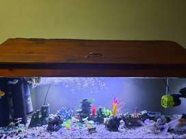 4ft fish tank with all accessories including fish
