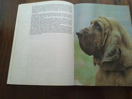 Psy rasowe w Polsce