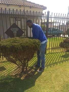 MALAWIAN GARDENER available