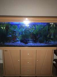 Image of CASH ONLY Tropical fish tank with pumps and filters