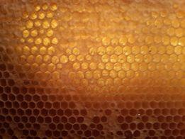 Продам мед подсолнуха 2018 Бесплатная доставка Харькову в день заказа