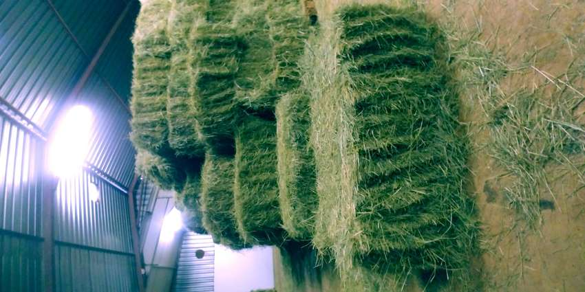 Teff Bales for sale 0