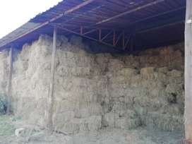 Fresh hay bales for sale