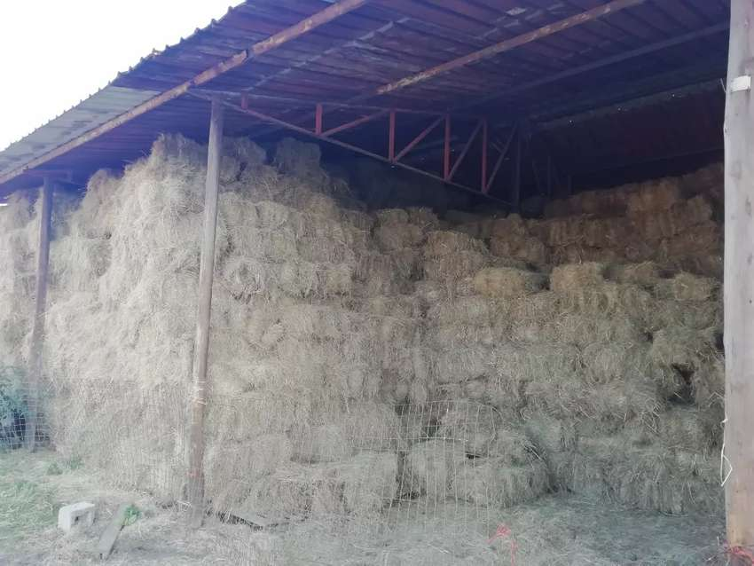 Fresh hay bales for sale 0