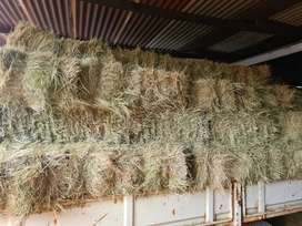Teff and grass mix bales
