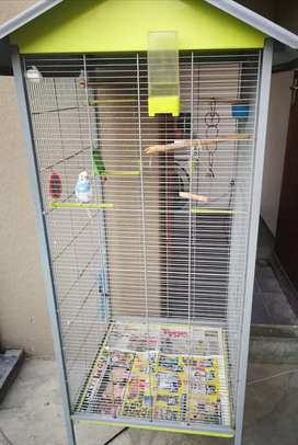 Bird cage with budgie