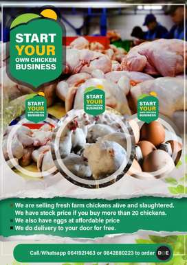 START YOUR OWN CHICKEN BUSINESSES