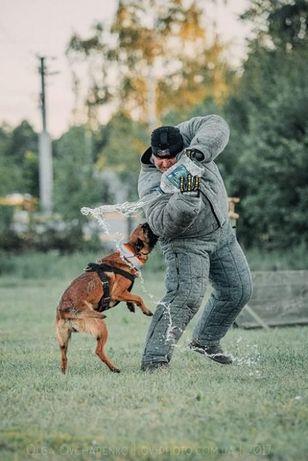 Дрессировка собак в Запорожье - команда SmartDog Запорожье - изображение 5