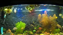 Oświetlenie do akwarium 100cm - 7 lat gwarancji