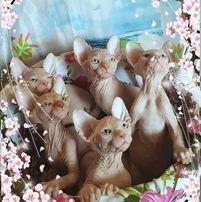 Здоровые котята