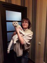 Шотландский кот приглашает в гости