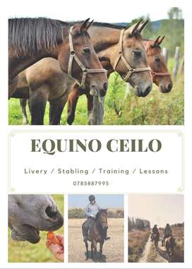 EQUINO CEILO Stable Yard