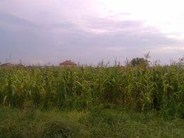 Продаю земельну ділянку під забудову с. Магала (Буда)