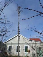 Спилить дерево не наломав дров!Обрезка деревьев в Одессе.