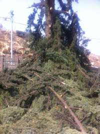 Image of Bush, Site Clearing,Gardening and Landscaping