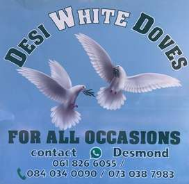 Doves for hire
