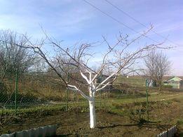 Обрезка деревьев сада.Закладка сада.Уход за садом