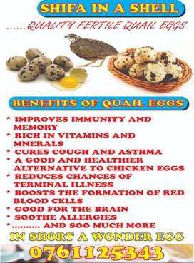 quail eggs to clear in durban