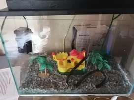 30litre fish tank with accessories
