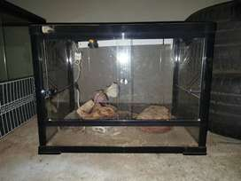 Reptile enclosure with needed light fittings