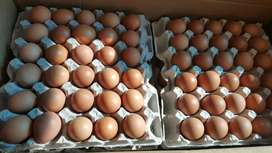 EXTRA LARGE EGGS FOR SALE R40