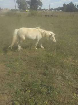 Beautiful Pony Looking for a new home