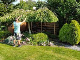 Przycinanie drzew,wycinka WERTYKULACJA wszystko w ogrodzie od A do Z
