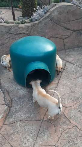 Dog Shelter for sale - small to medium size dogs