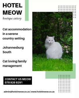 Hotel Meow Boutique Cattery
