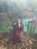 Продам гупіки і водорості