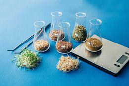 ЗЕРНА СЕМЕНА Органика для ПРОРАЩИВАНИЯ пшеница ячмень люцерна соя др