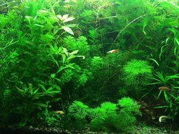 Акваріумні рослини. Аквариумные растения. Аквадизайн. Креветки. Рибки