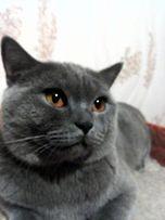 Супер кот на вязку!!!