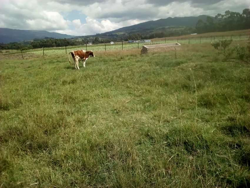 400 acres of land for sale in nyahururu touching a river. 0