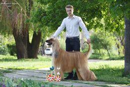 ХЕНДЛЕР. Профессиональный показ собак на выставках. Занятия с собакой.