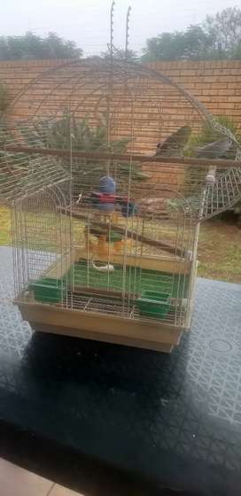 Big Budgy cage with 2 budgies