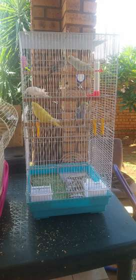 Cage with budgies