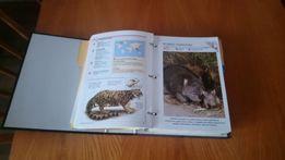 Encyklopedia zwierząt w segregatorze