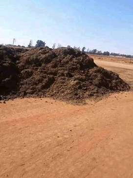 Chicken manure