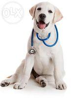 Вызов ветеринара.Ветеринар Днепропетровск. Кастрация кота.Стерилизация
