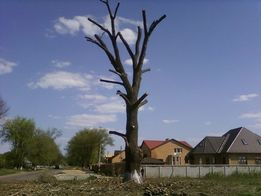 Спил, обрезка, распил, омолаживание, деревьев мешающих веток, деревьев