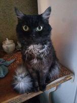 Суперский кот Гарри в дар!