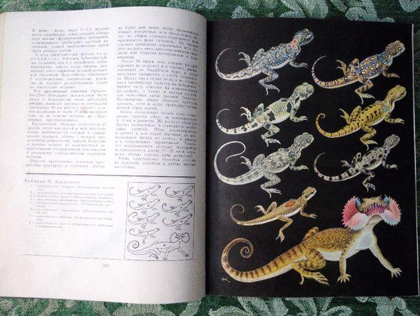 Фауна мира. Птицы. Цветовой атлас растений. Жизнь животных Киев - изображение 6