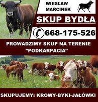 Skup bydła,żywca,zwierząt:krowa,byk,jałówka<bydło>krów, jałówek,byków