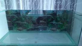 Great condition fish tank with perks