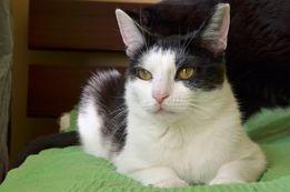 KALINKA - słodka, rozkoszna, piękna koteczka szuka dobrego domu/Poznań