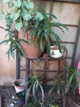 Pot plant with stand