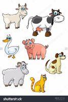 кастрация всех видов животных.